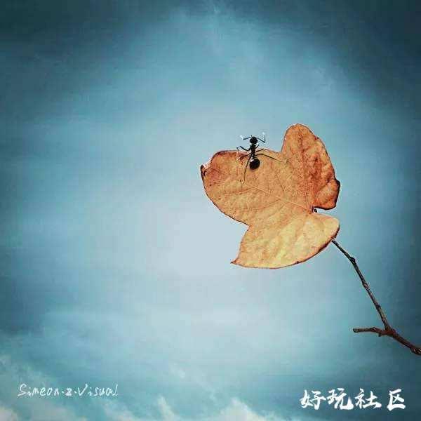 坚持自己的梦想,即使没有翅膀也能飞翔。