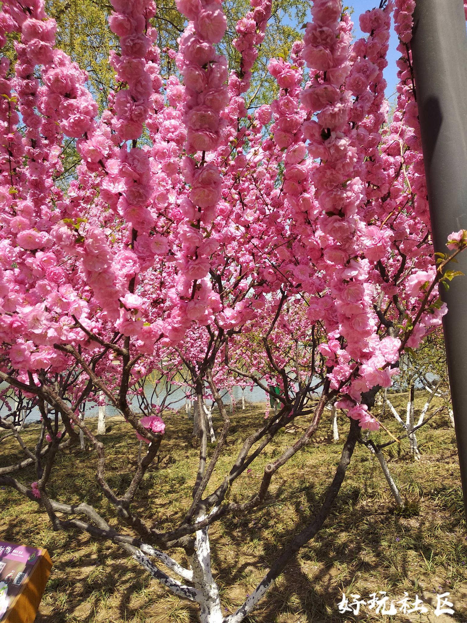 春暖花开时