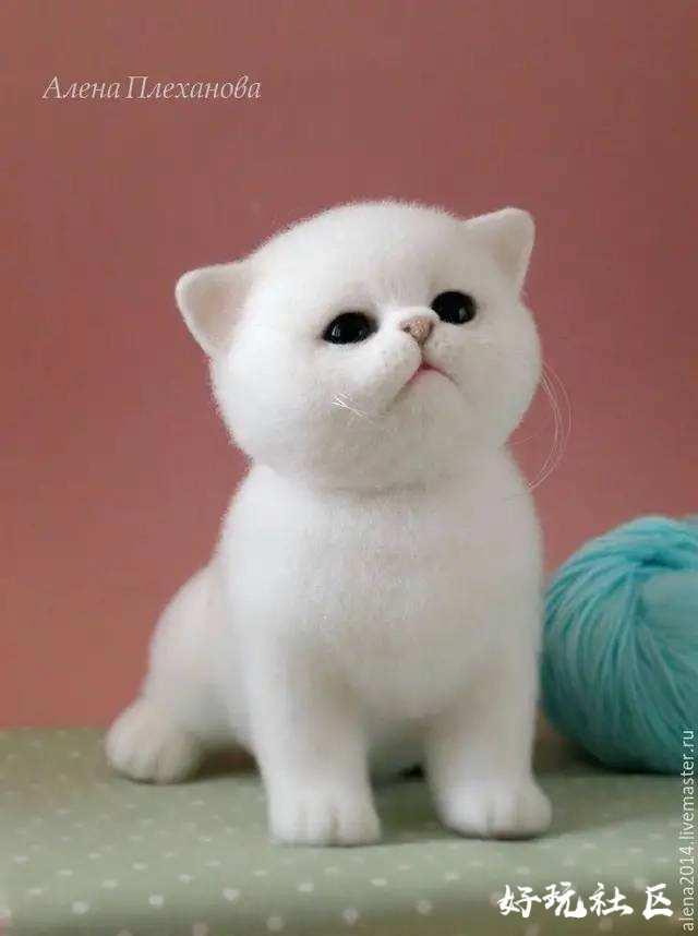 小猫太可爱了