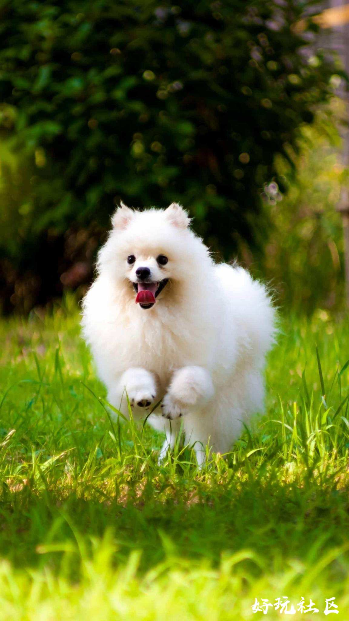 漂亮的小狗