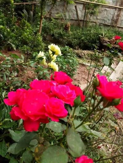 期待鲜花烂漫。